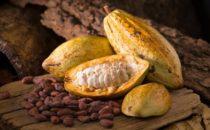 Ministro de Agricultura anuncia fondo de 400 millones de pesos a sector cacao